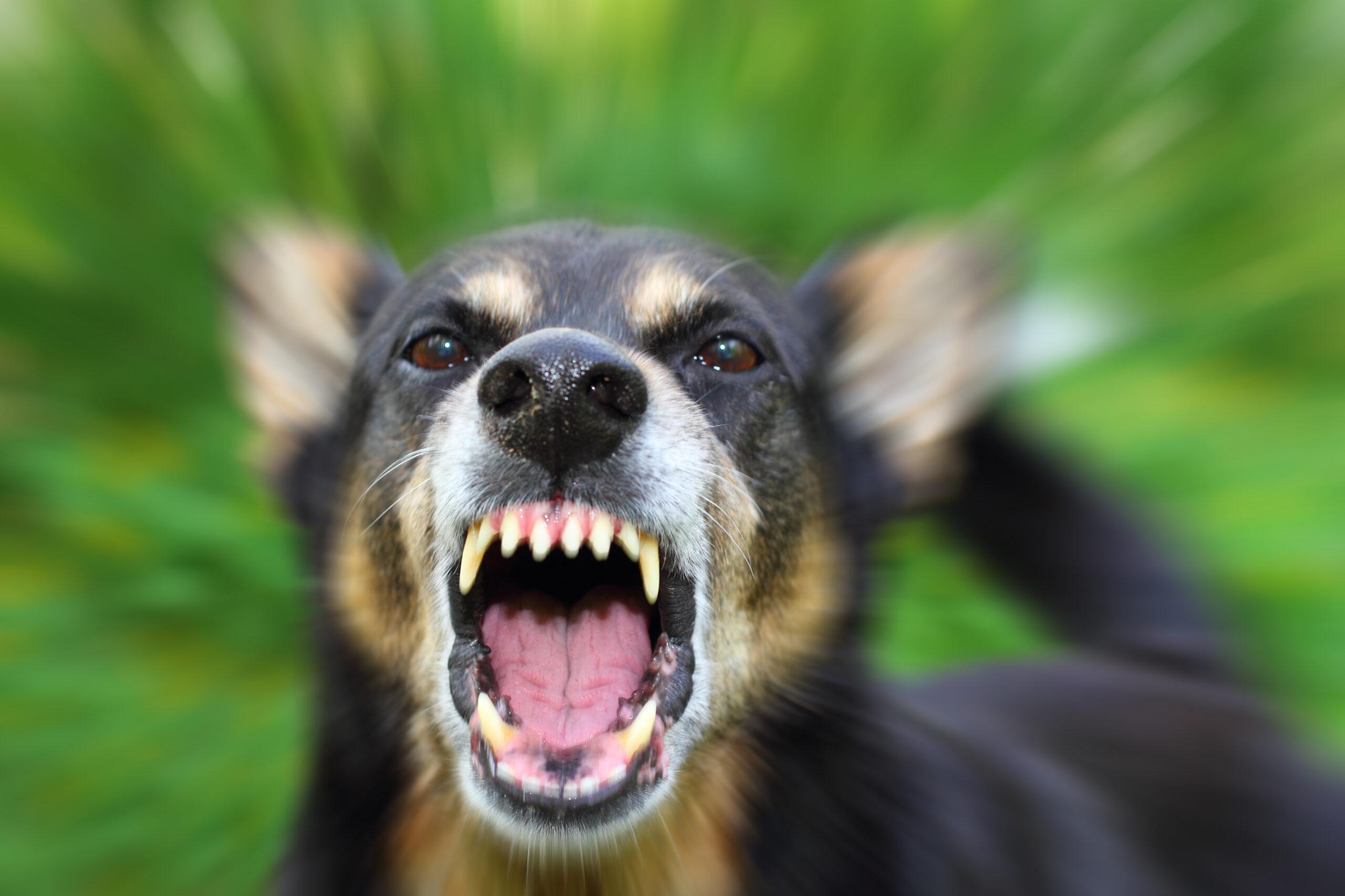 How Much is Your Calabasas Dog Bite Case Worth?